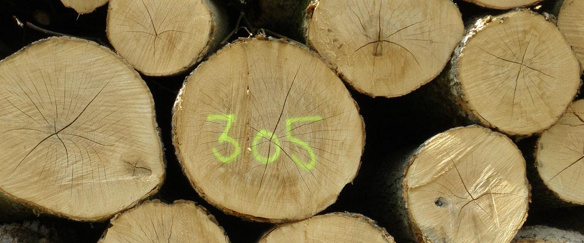 schulz skovbrug